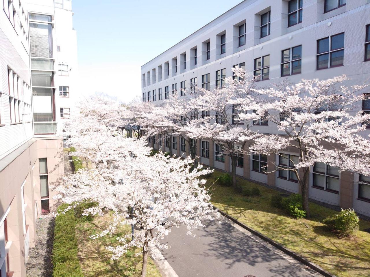 キャンパス内の桜と中高グラウンドの桃の花が満開になりました